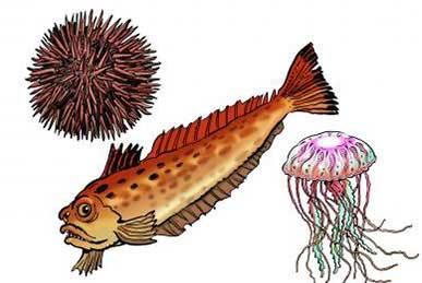 Vives, oursins et méduses