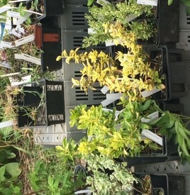 Foire aux plantes reportée