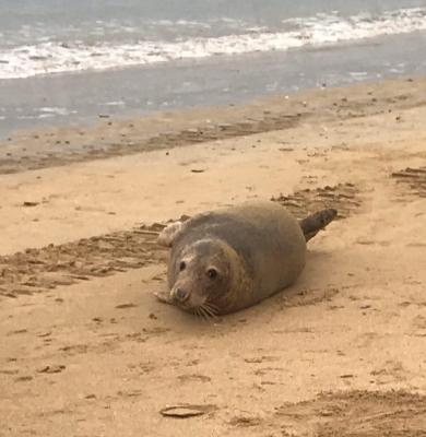 Réunion publique sur les phoques mardi 27 juillet