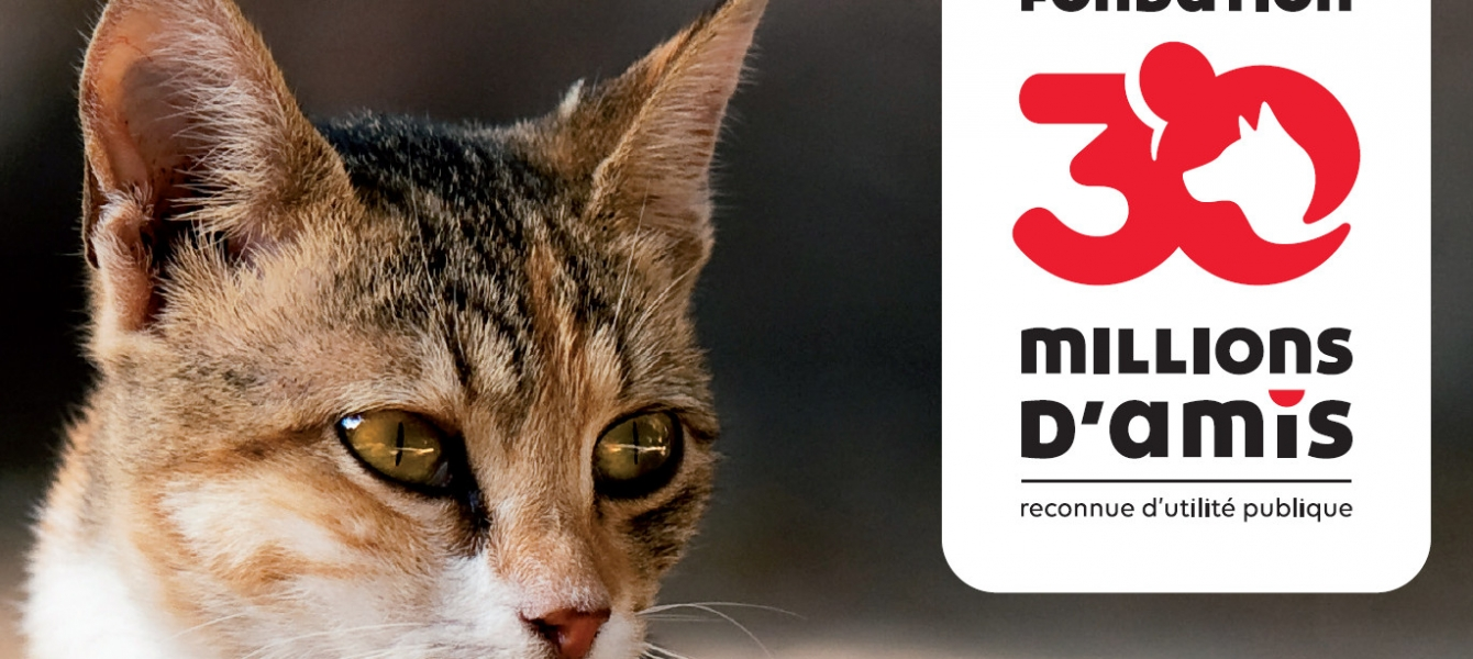 campagne de capture de chats sur la commune de lion sur mer du 1er novembre au 31 décembre 2020